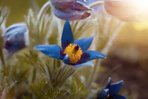 spring, spring flower, garden
